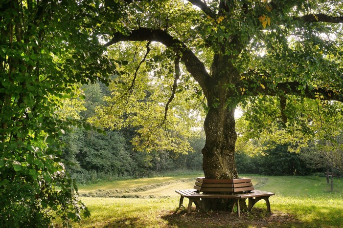 tree-2923837_1280